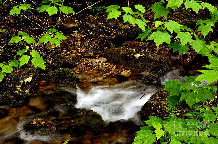 Mountain Stream In Spring Photograph  - Mountain Stream In Spring Fine Art Print