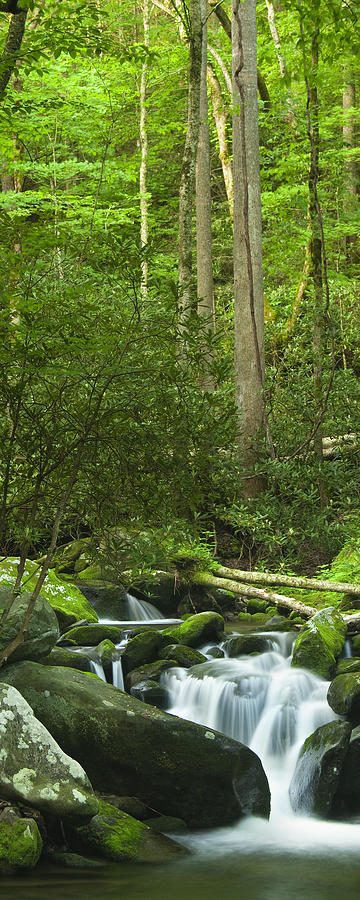 Mountain Stream Panorama Photograph
