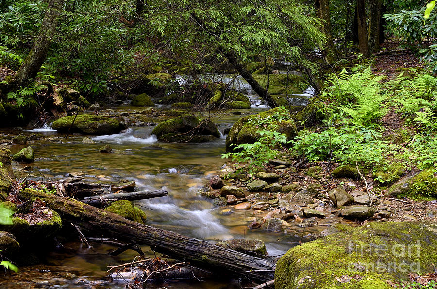 Mountain Stream Spring Photograph