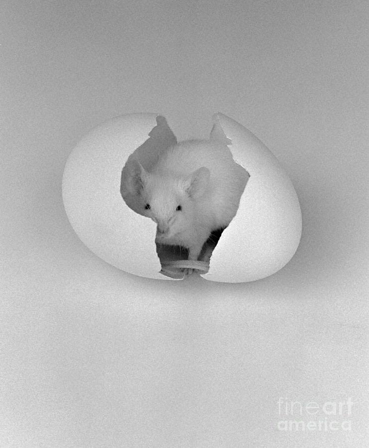 Mouse House Photograph