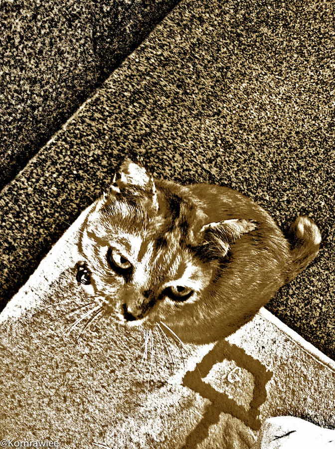 Ms Gato In Sepia Photograph  - Ms Gato In Sepia Fine Art Print