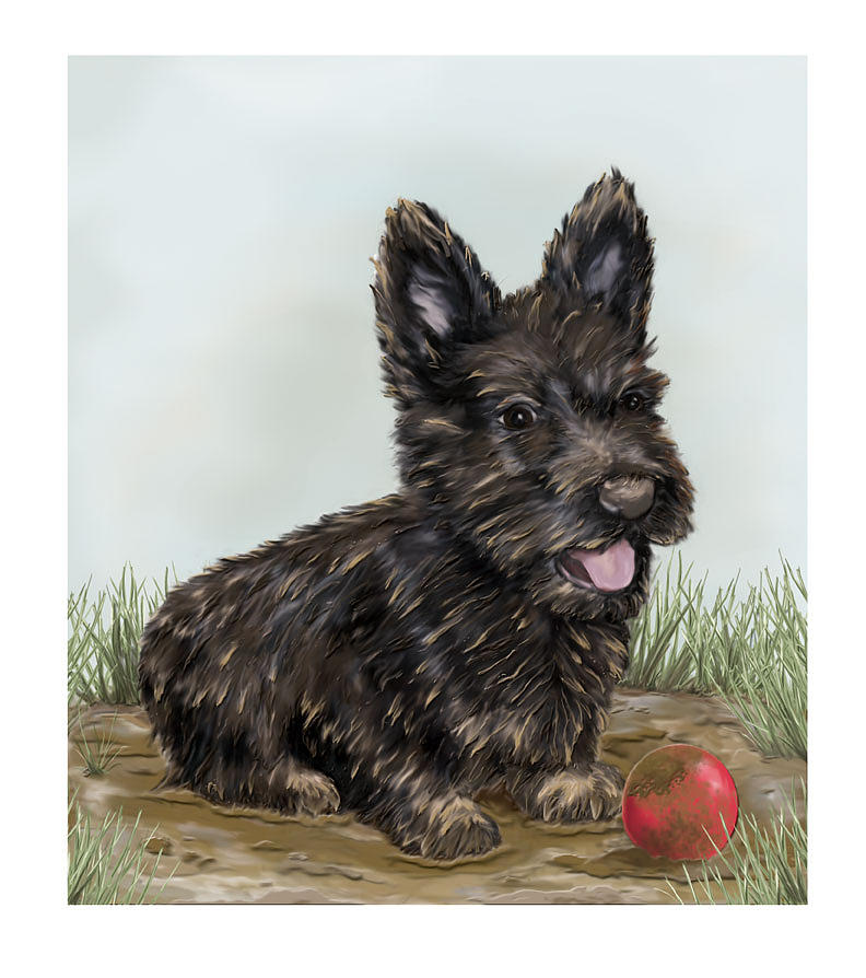 muddy - Scottish Terrier Digital Art