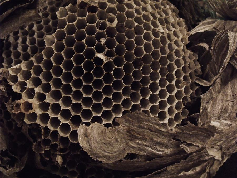 Mudwasp Nest 6 Photograph