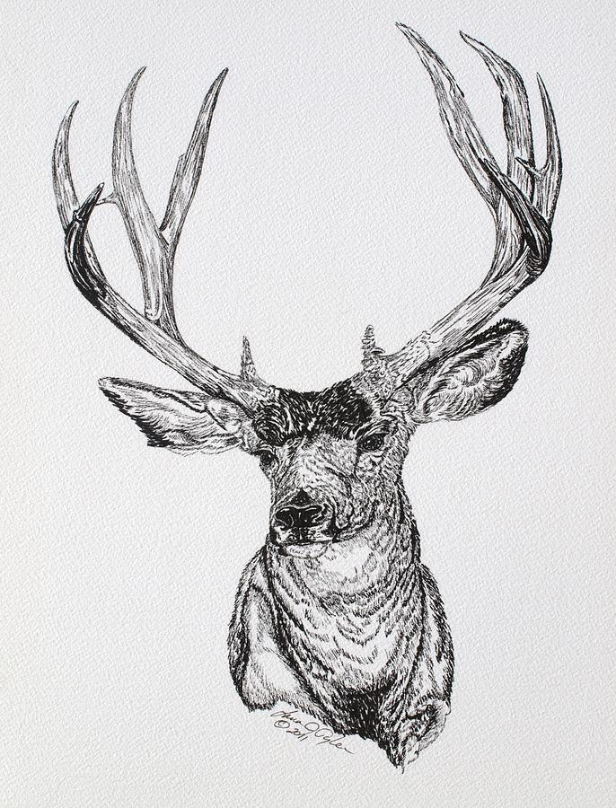 Mule Deer Buck DrawingDrawings Of Deer Bucks