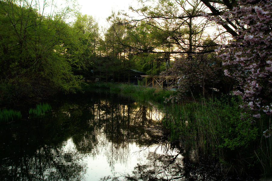 Murky Water Photograph