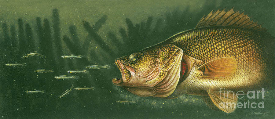 Murky Water Walleye Painting