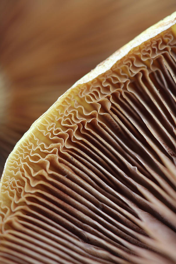 Mushrooms Photograph