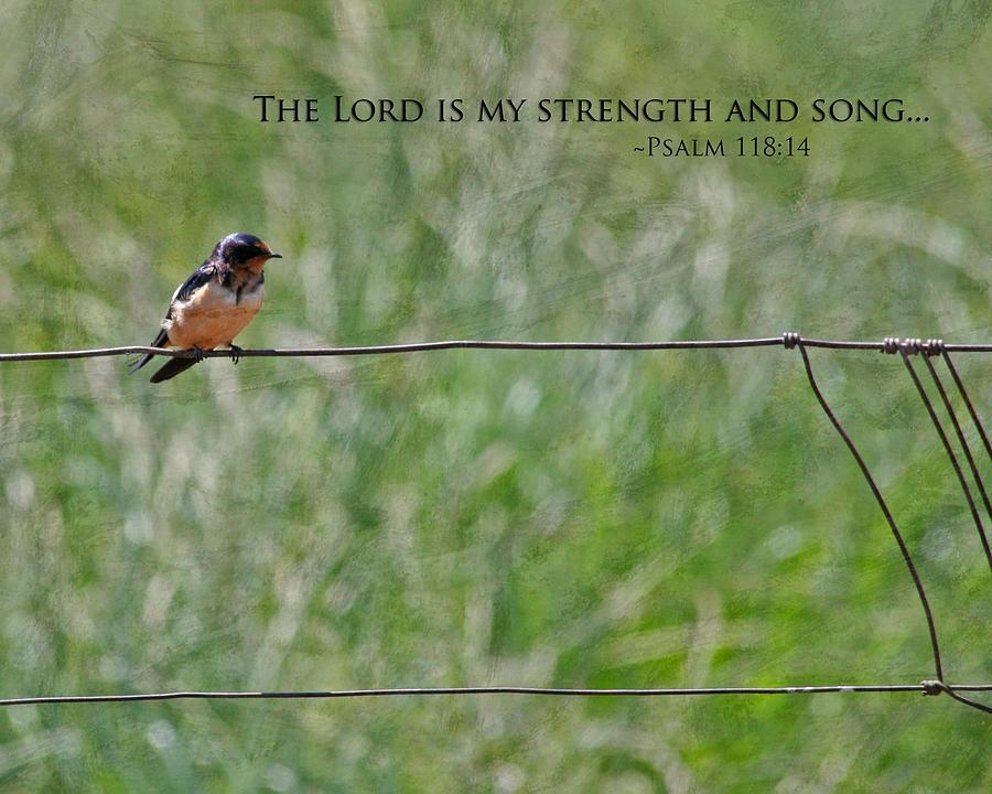 My Strength Photograph
