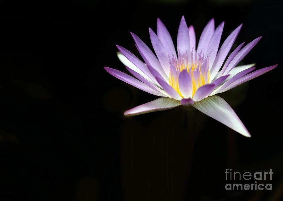 Mysterious Water Lily Photograph  - Mysterious Water Lily Fine Art Print