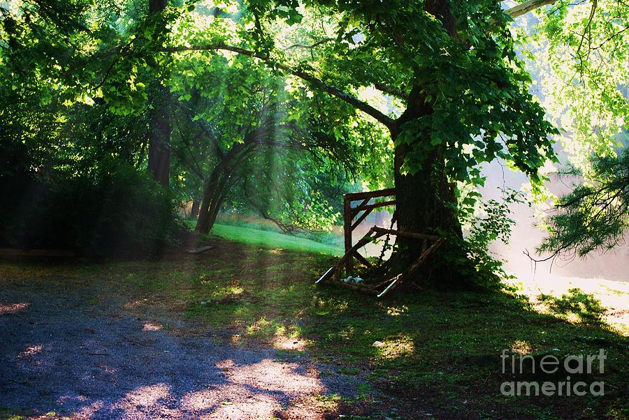 Mystic Tree Photograph  - Mystic Tree Fine Art Print
