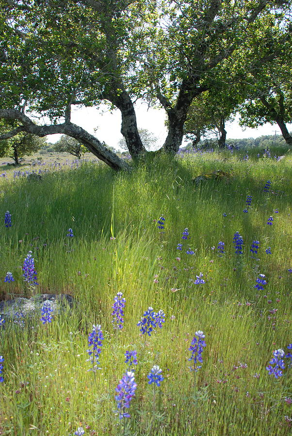 Napa Hills Meadow Photograph