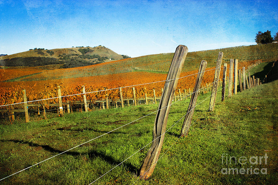 Napa Valley In Autumn Photograph  - Napa Valley In Autumn Fine Art Print