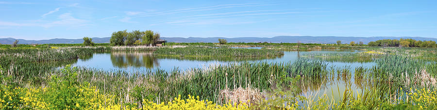 National Wildlife Preserve Marshes In Klamath Falls Oregon. Photograph