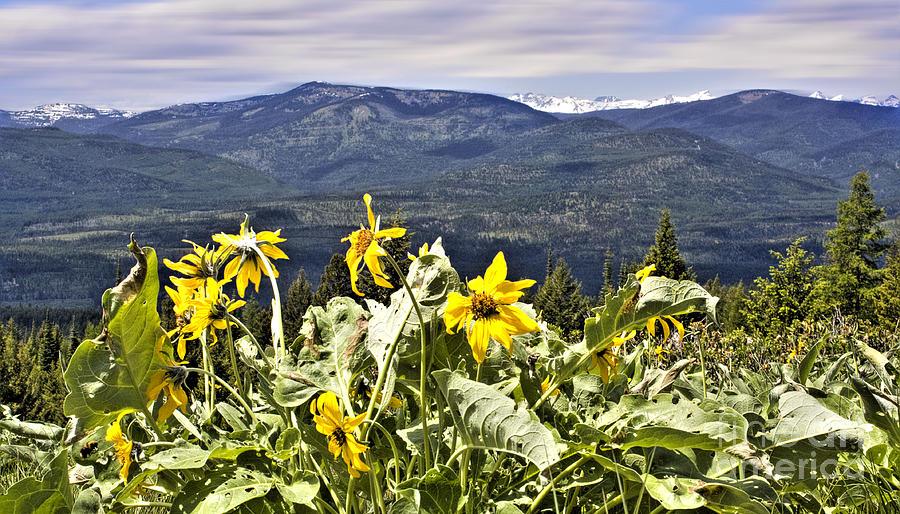 Montana Landscapes Photographs Photograph - Nature Dance by Janie Johnson