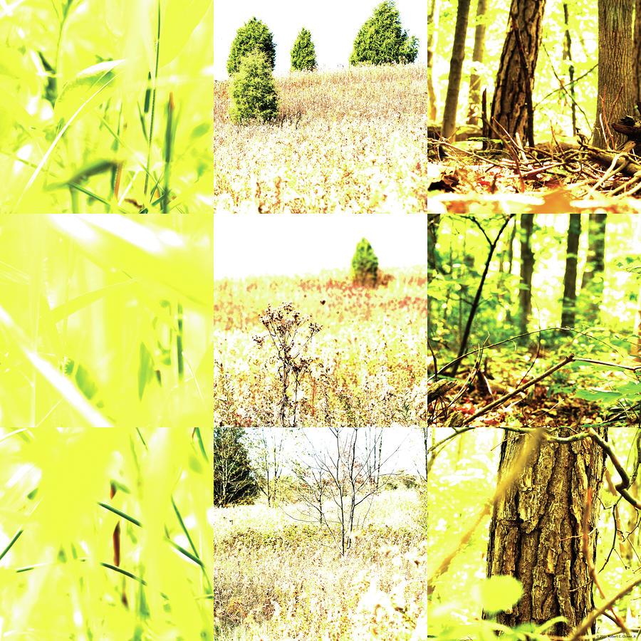 Nature Scape 015 Photograph