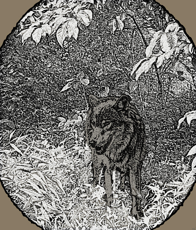 Nature Walk Wolf Drawing  - Nature Walk Wolf Fine Art Print