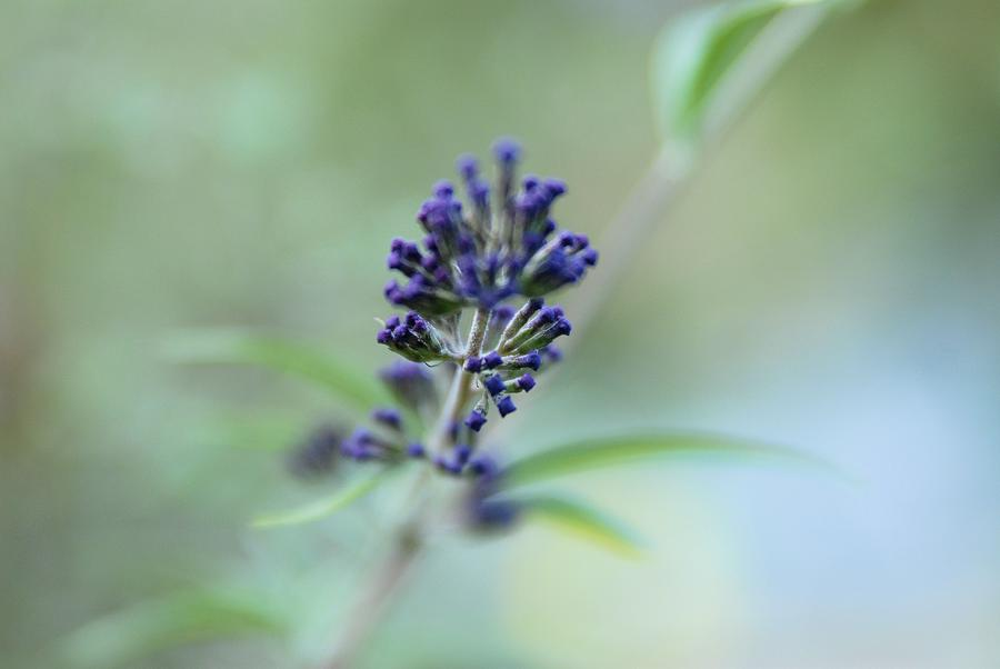 Purple Photograph - Natures Brush by