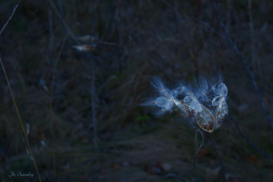 Natures Fairies Photograph  - Natures Fairies Fine Art Print