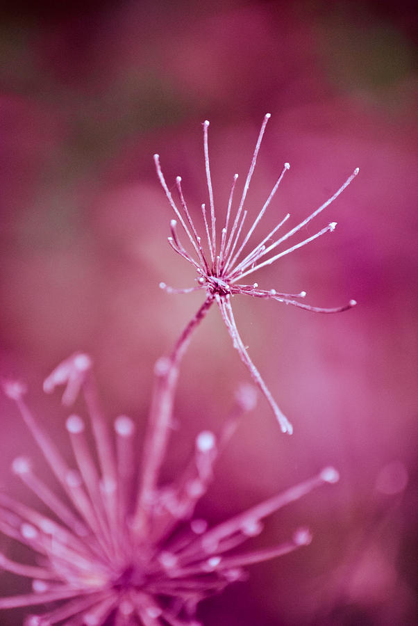 Natures Fireworks One Photograph  - Natures Fireworks One Fine Art Print