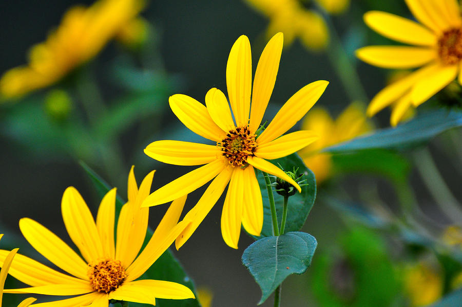 Natures Sunshine by Todd Hostetter