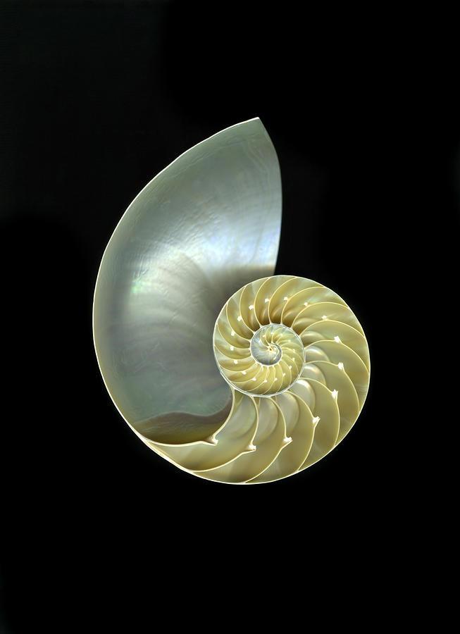 Nautilus Nr.1 Photograph