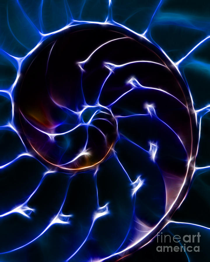 Nautilus Shell - Electric - Blue Photograph