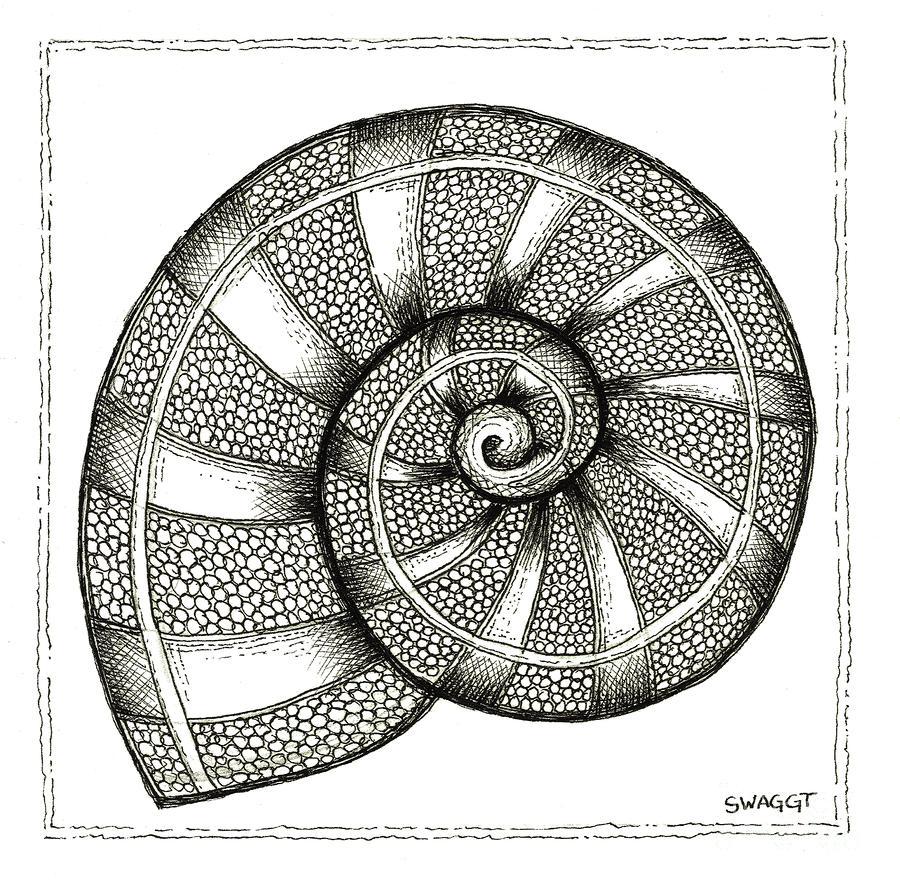 Nautilus Drawing