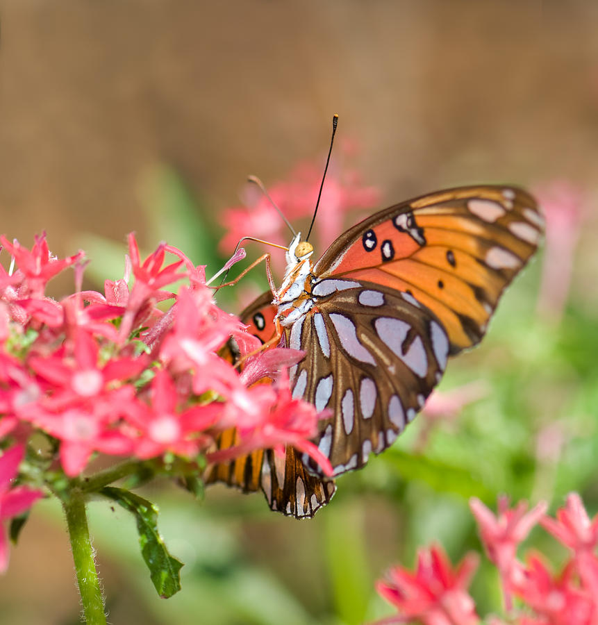 Nectaring Photograph