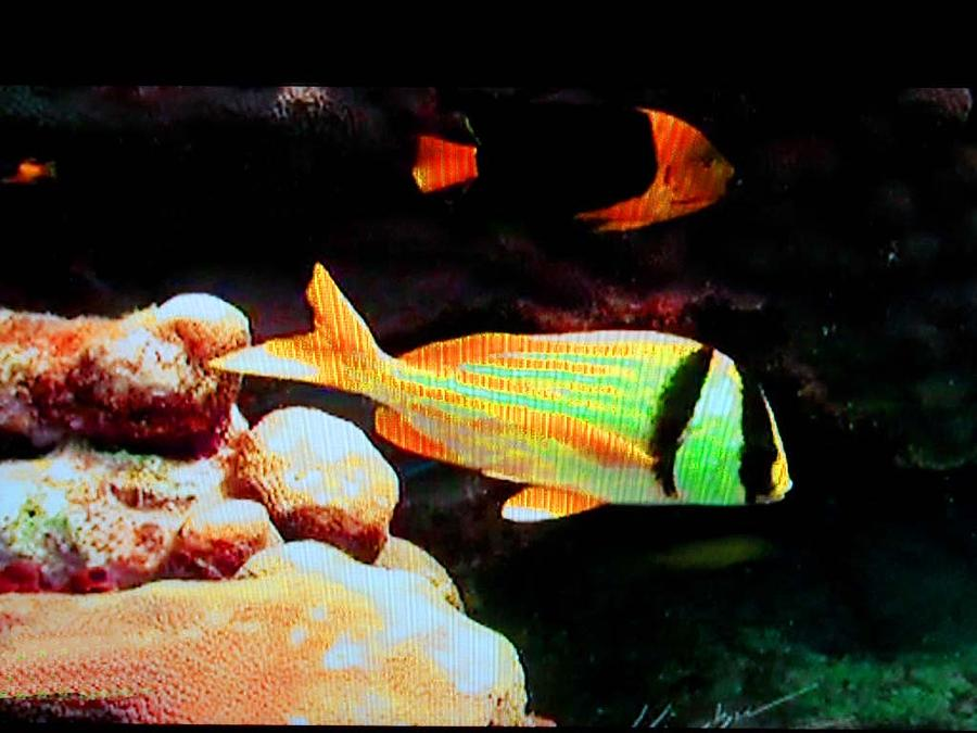 Neon Fish Photograph