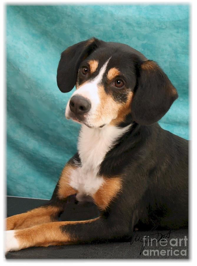 Dog Digital Art - New Breed Entlebucher Pup by Maxine Bochnia