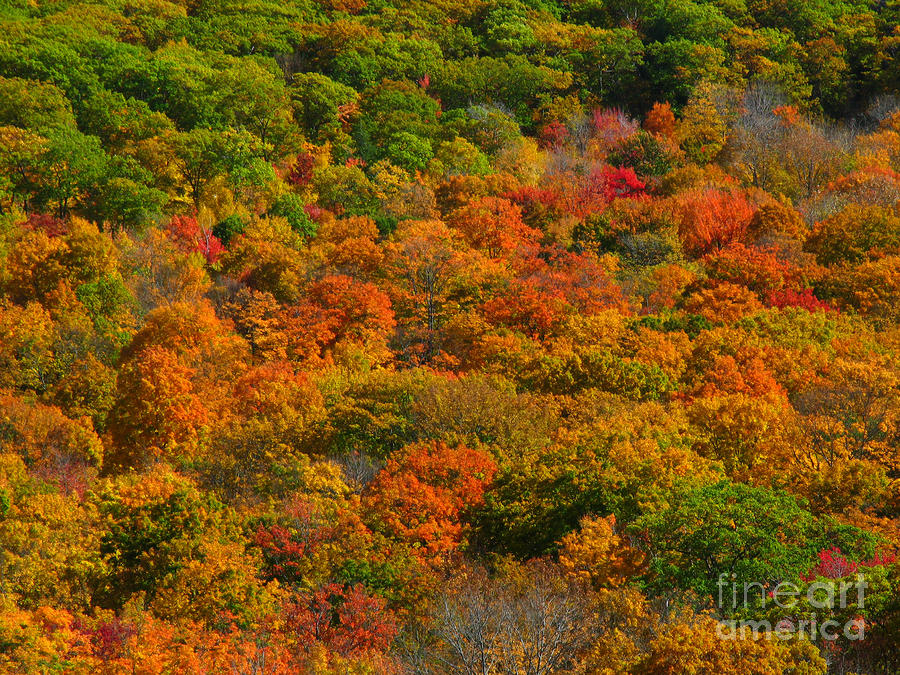 New England Fall Foliage Peak  Photograph  - New England Fall Foliage Peak  Fine Art Print