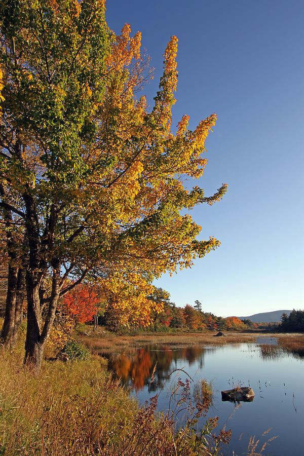 Acadia Photograph - New Mills Meadow Pond by Juergen Roth