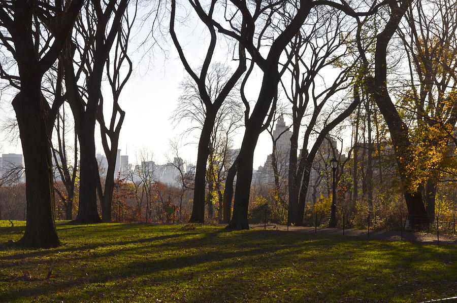 New Photograph - New York Trees by Snow  White