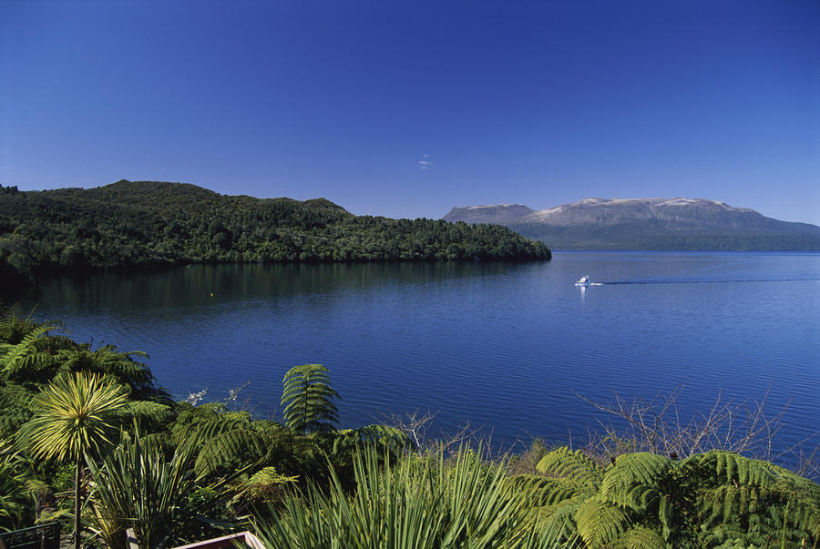 New Zealand, Rotorua Photograph