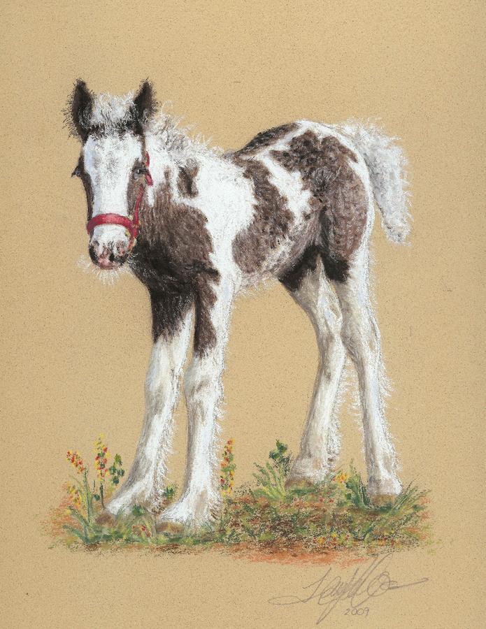 Newborn Foal Pastel