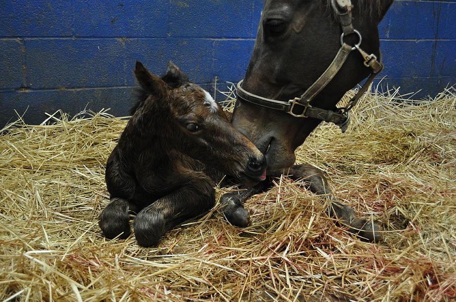Newborn Foal by Terry Sita