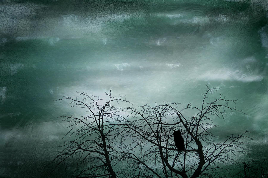 Night Owl Photograph  - Night Owl Fine Art Print