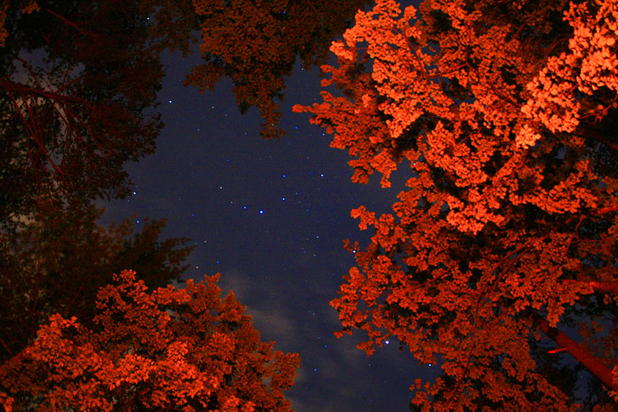 Night Sky By The Campfire Photograph