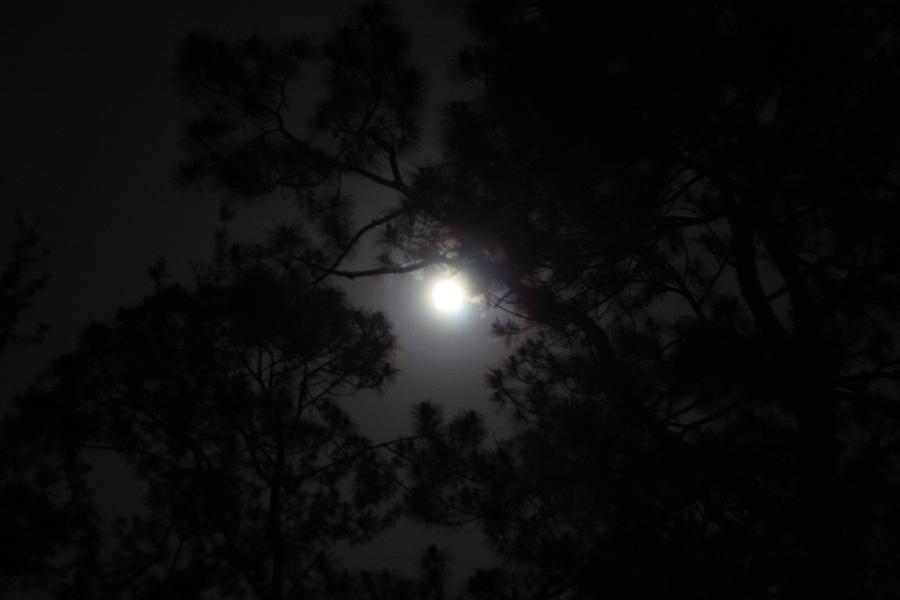 Nightlight  Photograph