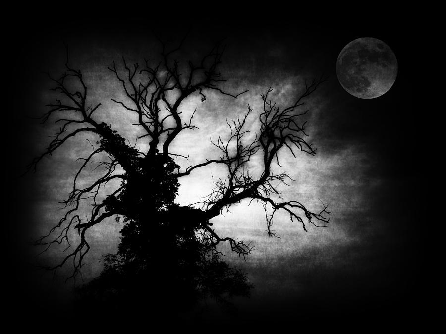 Nightmare Tree Photograph Nightmare