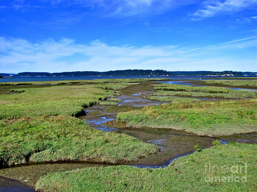 Nisqually Estuary At Low Tide Photograph  - Nisqually Estuary At Low Tide Fine Art Print