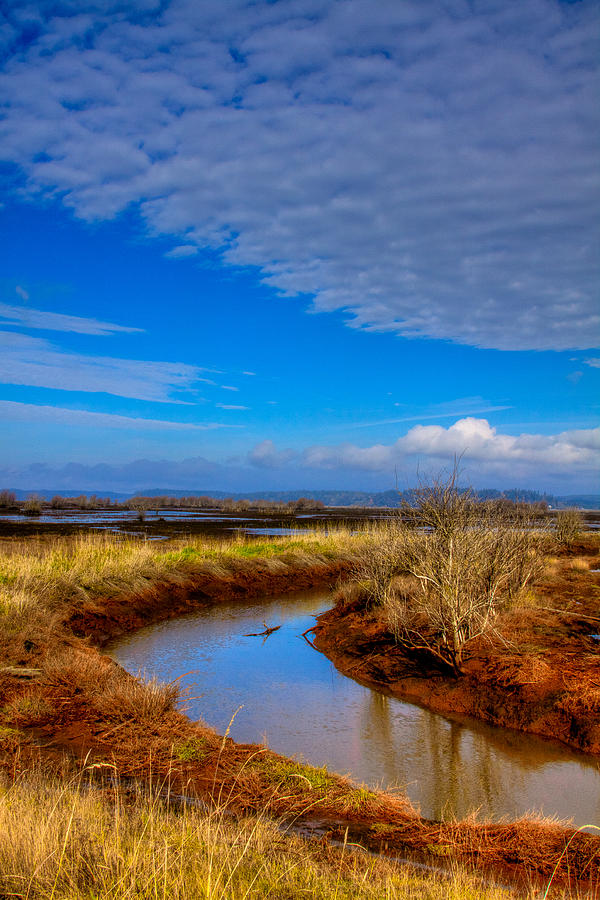 Nisqually Wildlife Refuge P33 Photograph  - Nisqually Wildlife Refuge P33 Fine Art Print