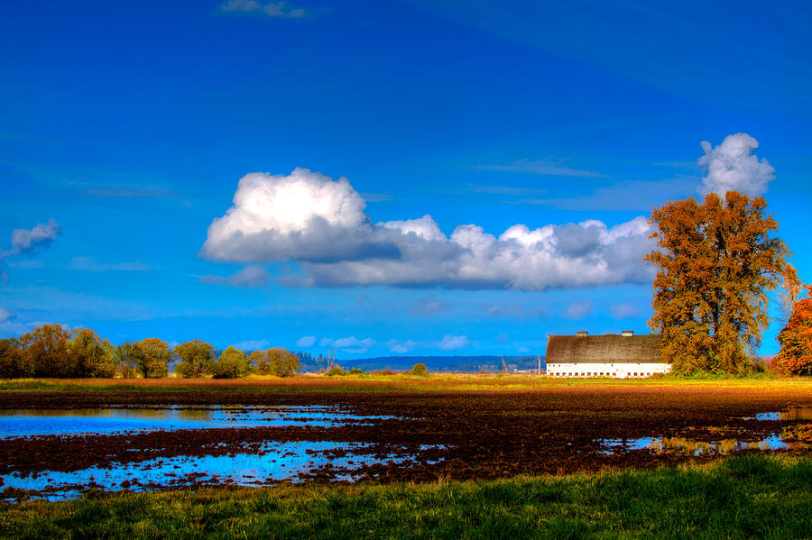 Nisqually Photograph - Nisqually Wildlife Refuge P35 by David Patterson
