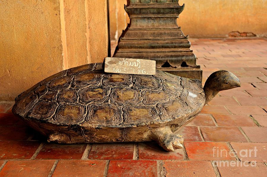 Turtle Photograph - No Sitting by Dean Harte