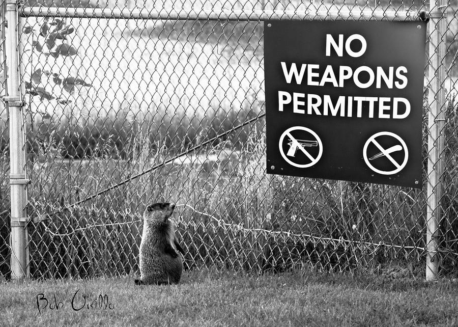 No Weapons Permitted Photograph  - No Weapons Permitted Fine Art Print
