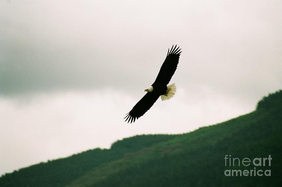 Nooksack Eagle Photograph