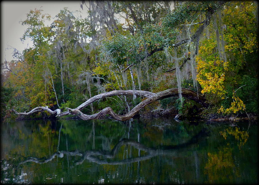 Florida Photograph - North Florida River Reflections by Carla Parris