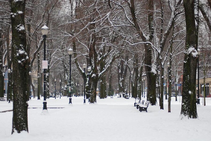 portland snowing