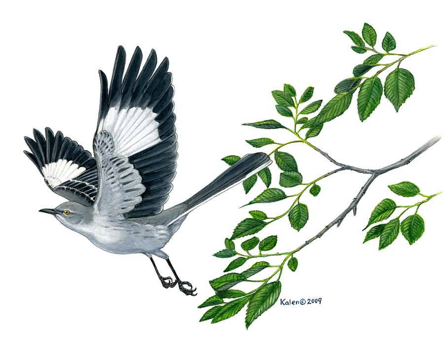 Northern Mockingbird By Kalen Malueg
