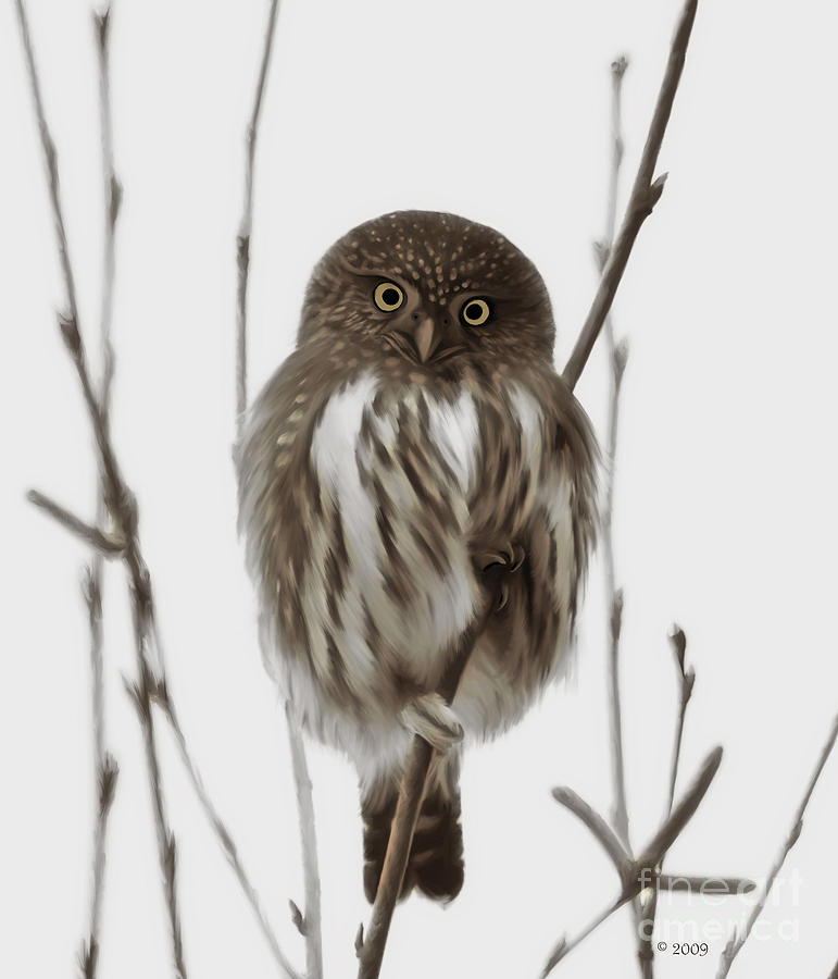 Northern Pygmy Owl - Little One Painting  - Northern Pygmy Owl - Little One Fine Art Print